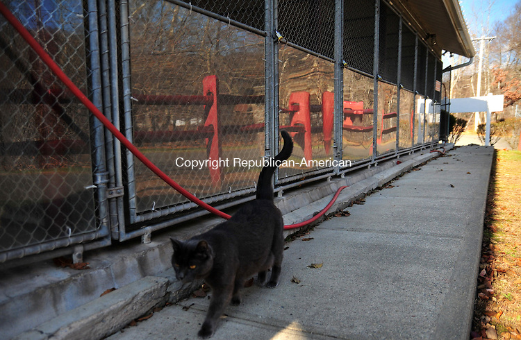 THOMASTON, CT, 18 NOV 11-111811AJ01- A lone cat strolls past a row of empty dog kennels at the Thomaston Animal Shelter on Waterbury Road Friday afternoon. A local businessman who adopted a dog from the shelter recently is raising money for the kennel. Alec Johnson / Republican-American
