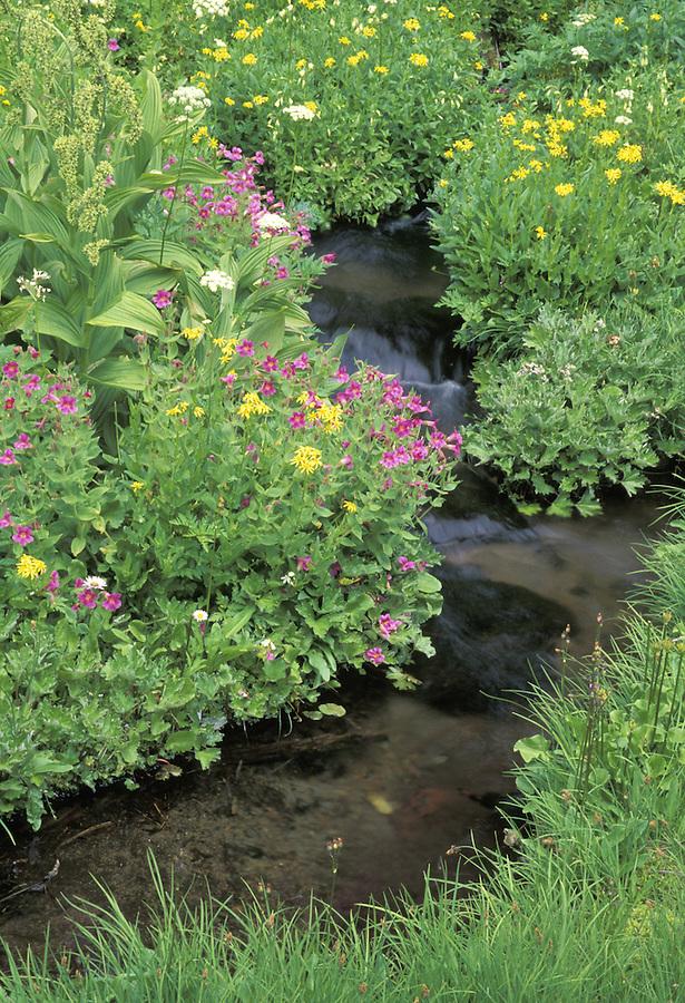 Wildflower-lined mountain brook, Spray Park, Mount Rainier National Park, Washington