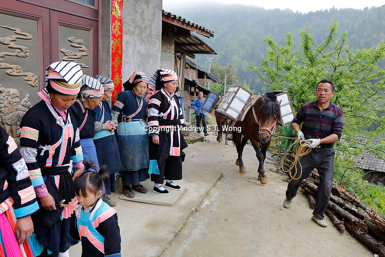 Workers transport building materials by horses as they pass villagers of the ethnic Bouyei Tribe at Wangmo County in China's southwestern Guizhou Province, April 2019.