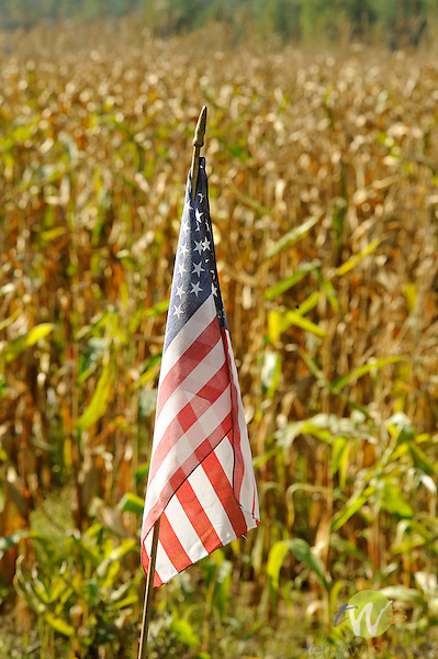 American flag and cornfield.