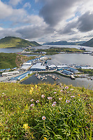 Wildflowers and Dutch Harbor and UnAlaska, Iliuliuk Bay, Aleutian Islands, Alaska.