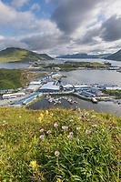Wildflowers and Dutch Harobor and Unalaska, Iliuliuk Bay, Aleutian Islands, Alaska.