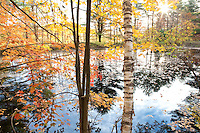 Trees and pond reflections with fall color, autumn in Vermont