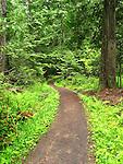 The Trail to Elk Creek Falls, Idaho