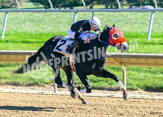 Midnight Rodeo winning at Delaware Park on 10/19/17