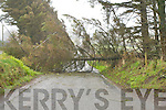 Kerry was hammered with gale force winds on Monday afternoon which felled dozens of trees around the county this tree blocked the Currow-Killarney road at Rossanean, Currow.   Copyright Kerry's Eye 2008