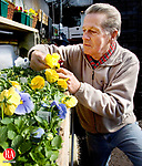 WATERTOWN CT. 24 March 2014-032414SV04-Mark Werenko of Markís Garden Center tends to his Pansy plants on Main Street in Watertown Monday. Werenko said he get his first order of flowers on the first day of spring every year no matter what the weather is like and Pansy are the first to show color waking us up to spring.<br /> Steven Valenti Republican-American