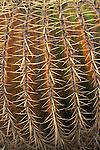 Cactus at the Wrigley Memorial Botanical Garden, Avalon, Catalina Island, California