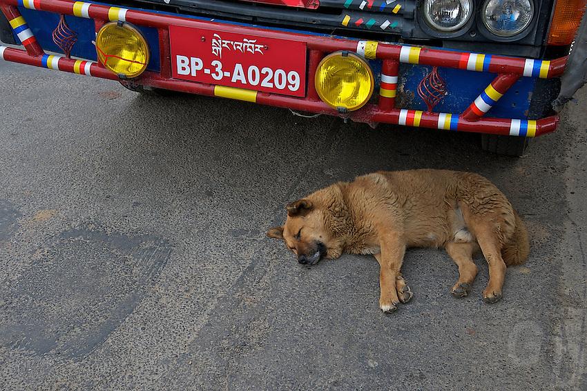 Dog sleeping next to a car,Paro Bhutan