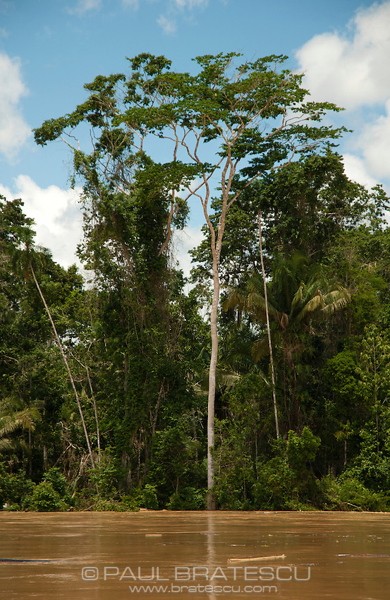 Rio Madre Dios, Lower Amazon, Peru