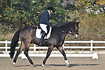 Stapleford Abbotts. United Kingdom. 08 November 2019. Class 1. British Dressage. Brook Farm training centre. Stapleford Abbotts. Essex. United Kingdom. Credit Garry Bowden/Sport in Pictures.~ 08/11/2019.  MANDATORY Credit Garry Bowden/SIP photo agency - NO UNAUTHORISED USE - 07837 394578