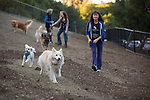 New dog park opens in Los Altos Hills