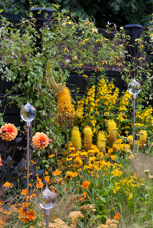 Yellow and orange color theme garden in layers with glass globe flower ornaments, gold color theme plantings, Clematis tangutica type