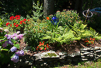 Blue gazing ball with hemerocallis daylilies, impatiens, ferns, hydrangea, pelagronium, spiraea under tree in raised bed with rocks