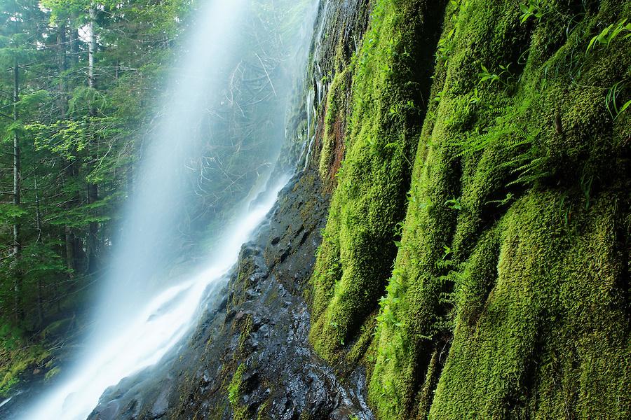 An un-named waterfall spills over a mossy cliff near Stevens Canyon Entrance, Mount Rainier National Park, Washington, USA