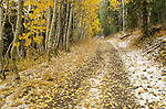 Dirt road dusted with snow running through aspen forest, fall, Hope Valley, Toiyabe National Forest, California