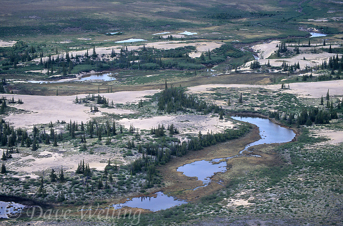 731000213 sand eskers boreal forest trees and pothole ponds seen from the air in the northwest territories in northern canada