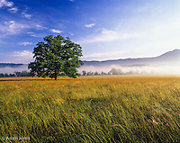 Single tree in field, Cades Cove, Great Smoky Mountains National Park, Tennessee