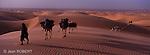 En bordure de l'océan Atlantique, le désert de Mauritanie est encore une terre de nomades. Destination de prédilection de Théodore Monod, l'Adrar de Mauritanie est idéal pour s'initier aux randonnées chamelières et aux méharées. Erg de l'Amatlich. Mauritanie..Bordering the Atlantic Ocean, the desert of Mauritania is still a land of nomads. The mauritanian Adrar was the favorite place of Theodore Monod. The Amatlich dunes are the best place to make a trek with camels escorted by Maure people. Mauritania