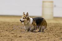 Minnesota Stock Dog Trials