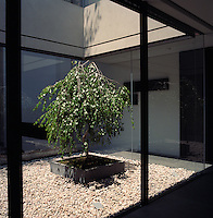 The open-plan apartment centres around a minimalist gravel-filled courtyard planted with a miniature tree