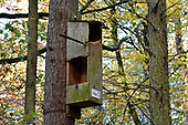 Tawny Owl box, Stoke Wood, Oxfordshire