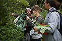 Biology class outside, seeking various types of leaves to examine in class.