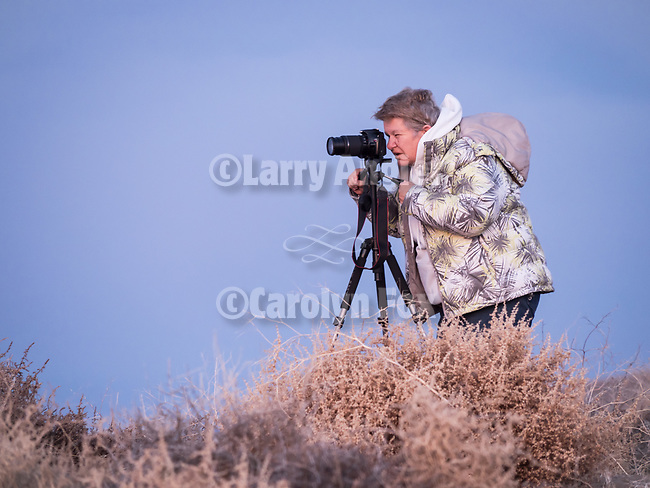 Morning on the Dunes with Moose Peterson at 0-darkthirty during Shooting the West XXIX, Winnemucca, Nevada, The Nevada Photography Experience.<br /> <br /> <br /> <br /> @moose.peterson, #moose.peterson<br /> <br /> <br /> #WinnemuccaNevada, #ShootingTheWest, #ShootingTheWest2017, @WinnemuccaNevada, @ShootingTheWest, @ShootingTheWest2017Light on the land along I-80 landscape during winter.<br /> Morning on the Dunes with Moose Peterson at 0-darkthirty during Shooting the West XXIX, Winnemucca, Nevada, The Nevada Photography Experience.<br /> <br /> <br /> <br /> @moose.peterson, #moose.peterson<br /> <br /> <br /> #WinnemuccaNevada, #ShootingTheWest, #ShootingTheWest2017, @WinnemuccaNevada, @ShootingTheWest, @ShootingTheWest2017Light on the land along I-80 landscape during winter.