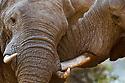 Africa: Mammals