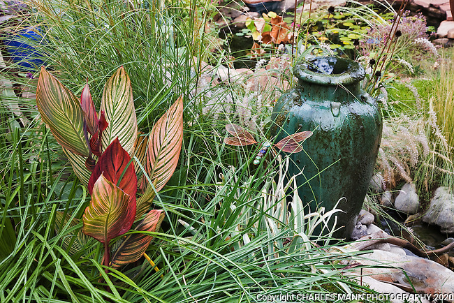 A varigated canna lily and a simple fountain made from a green urn create drama when paired wiht an ornamental grass in Dan Johnson's Denver garden.