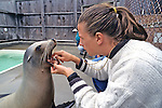 307 Sea Lion Language & Behavior - CA