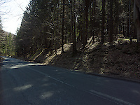 FOREST_LOCATION_90217