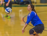 1 November 2015: Yeshiva University Maccabee Right Side and Outside Hitter Ilana Leggiere, a Sophomore from New York, NY, bumps against the SUNY College at Old Westbury Panthers at SUNY Old Westbury in Old Westbury, NY. The Panthers edged out the Maccabees 3-2 in NCAA women's volleyball, Skyline Conference play. Mandatory Credit: Ed Wolfstein Photo *** RAW (NEF) Image File Available ***