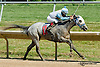 Gitanilla winning at Delaware Park on 7/6/13