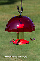 01162-12906 Ruby-throated Hummingbirds (Archilochus colubris) at Dr. JB's Hummingbird Feeder with Hummer Helmet, Marion County, IL