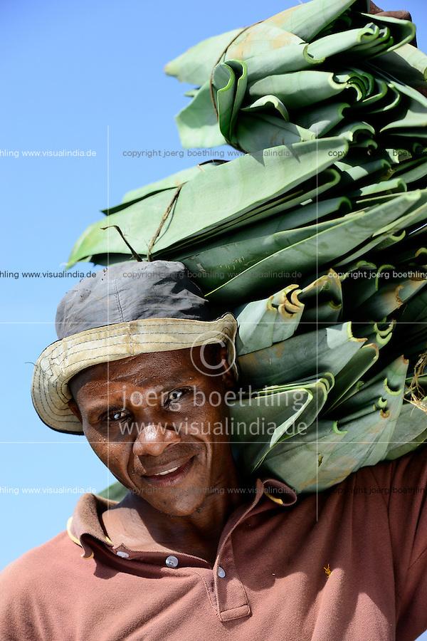 TANZANIA Tanga, Usambara Mountains, Sisal farming and industry, D.D. Ruhinda & Company Ltd., Mkumbara Sisal estate, farm worker harvest Sisal leaves / TANSANIA Tanga, Usambara Berge, Sisal Anbau und Industrie, D.D. Ruhinda & Company Ltd., Mkumbara Sisal Estate, Landarbeiter bei Ernte der Sisal Blaetter