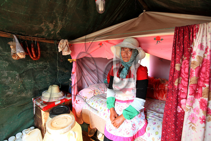 Luoping, Yunnan. Une apicultrice dans sa tente qui est &eacute;galement sa maison pendant les huit mois de l&rsquo;ann&eacute;e ou les apiculteurs voyagent de fleurs en fleurs.<br /> Luoping, Yunnan. A beekeeper in her tent, which is also her home for the eight months out of the year when the beekeepers travel from flowering field to flowering field.