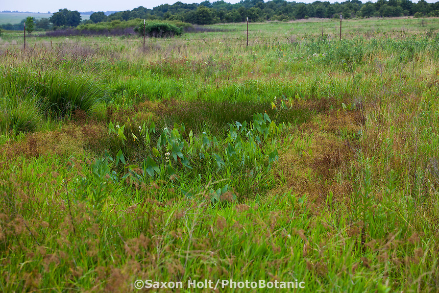 Buffalo or Bison wallow in Nature Conservancy Tallgrass Prairie Preserve, Oklahoma