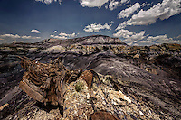A small yucca surrounded by a shattered rock with coal hills in the background in the Lybrook Badlands of northwestern New Mexico.
