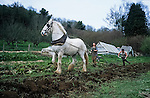 Ploughing with Sam the Shire horse.   Tinker's Bubble, Low impact community,  Somerset