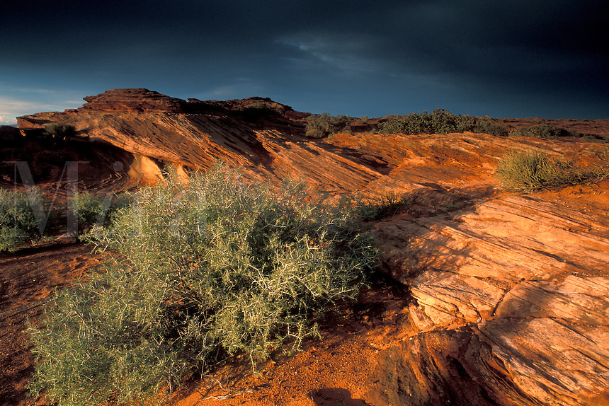Sunset light and storm clouds on eroded sandstone rocks and bush on canyon rim above the Colorado River, near Page, Arizona.