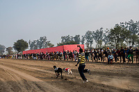 FARIDKOT, PUNJAB, INDIA - JANUARY 05, 2016: Spectators watch as greyhounds hurtle down the track, released by the Slipper, towards the finish line during a greyhound race meet on January 5, 2016 in Faridkot, India. <br /> Daniel Berehulak for The New York Times