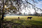 The Oregon City historic home of Dan and Sheryl Hall - morning in the horse pasture