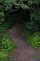 Pathway into the bushes and trees, Regent's Park, London, UK.