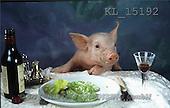Interlitho, Alberto, ANIMALS, pigs, photos, pig at table(KL15192,#A#) Schweine, cerdos