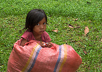 A child helping her father collecting grass for animal feed near Bayon Temple Angkor Wat area, Cambodia