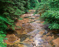 67ORCAC_019 - USA, Oregon, Willamette National Forest, Conifers and alders line banks of Soda Creek in early summer.