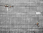 Black and white of construction workers on large grid