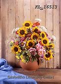 Interlitho-Helga, FLOWERS, BLUMEN, FLORES, photos+++++,sunflwowers, pot,KL16513,#f#, EVERYDAY ,sunflowers