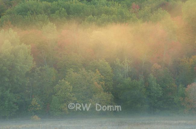 light and fog, Jordan River Valley Michigan